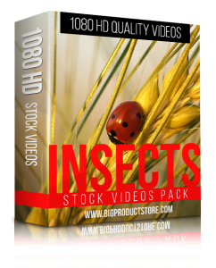 Insects1080HDStockVideosPack