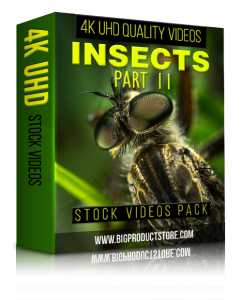 Insects4KUHDStockVideosPart2