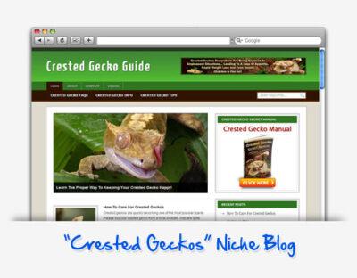 Crested Gecko Guide Niche Blog