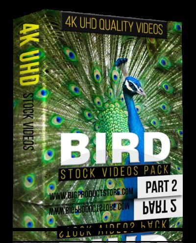 Bird4KUHDStockVideosPackPart2